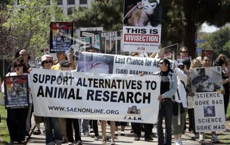 The pros and cons of animal testing